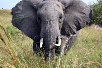 Kenija Tanzanija, putopis.info